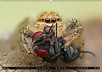 Faszination Makrofotografie: Beuteszenen (Wandkalender 2019 DIN A2 quer) - Produktdetailbild 4