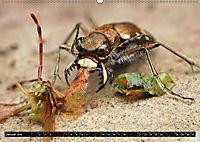 Faszination Makrofotografie: Beuteszenen (Wandkalender 2019 DIN A2 quer) - Produktdetailbild 1