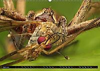 Faszination Makrofotografie: Beuteszenen (Wandkalender 2019 DIN A2 quer) - Produktdetailbild 6