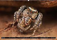 Faszination Makrofotografie: Beuteszenen (Wandkalender 2019 DIN A2 quer) - Produktdetailbild 7