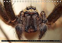 Faszination Makrofotografie: Spinnen (Tischkalender 2019 DIN A5 quer) - Produktdetailbild 2