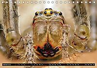 Faszination Makrofotografie: Spinnen (Tischkalender 2019 DIN A5 quer) - Produktdetailbild 1