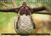 Faszination Makrofotografie: Spinnen (Tischkalender 2019 DIN A5 quer) - Produktdetailbild 6