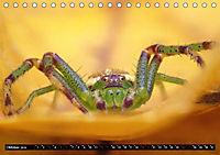 Faszination Makrofotografie: Spinnen (Tischkalender 2019 DIN A5 quer) - Produktdetailbild 10