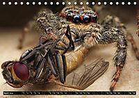 Faszination Makrofotografie: Spinnen (Tischkalender 2019 DIN A5 quer) - Produktdetailbild 4