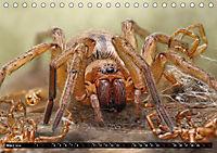 Faszination Makrofotografie: Spinnen (Tischkalender 2019 DIN A5 quer) - Produktdetailbild 3