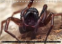 Faszination Makrofotografie: Spinnen (Tischkalender 2019 DIN A5 quer) - Produktdetailbild 5