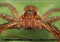 Faszination Makrofotografie: Spinnen (Tischkalender 2019 DIN A5 quer) - Produktdetailbild 7