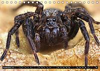 Faszination Makrofotografie: Spinnen (Tischkalender 2019 DIN A5 quer) - Produktdetailbild 9