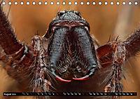 Faszination Makrofotografie: Spinnen (Tischkalender 2019 DIN A5 quer) - Produktdetailbild 8