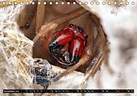 Faszination Makrofotografie: Spinnen (Tischkalender 2019 DIN A5 quer) - Produktdetailbild 12