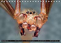 Faszination Makrofotografie: Spinnen (Tischkalender 2019 DIN A5 quer) - Produktdetailbild 11