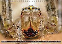 Faszination Makrofotografie: Spinnen (Wandkalender 2019 DIN A4 quer) - Produktdetailbild 1