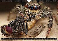 Faszination Makrofotografie: Spinnen (Wandkalender 2019 DIN A4 quer) - Produktdetailbild 9