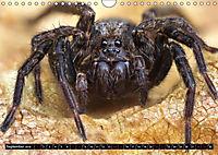 Faszination Makrofotografie: Spinnen (Wandkalender 2019 DIN A4 quer) - Produktdetailbild 8