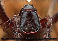 Faszination Makrofotografie: Spinnen (Wandkalender 2019 DIN A4 quer) - Produktdetailbild 12