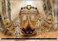 Faszination Makrofotografie: Spinnen (Wandkalender 2019 DIN A2 quer) - Produktdetailbild 1