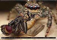 Faszination Makrofotografie: Spinnen (Wandkalender 2019 DIN A2 quer) - Produktdetailbild 4