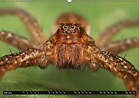Faszination Makrofotografie: Spinnen (Wandkalender 2019 DIN A2 quer) - Produktdetailbild 7