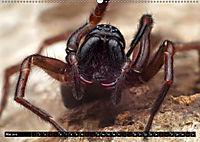 Faszination Makrofotografie: Spinnen (Wandkalender 2019 DIN A2 quer) - Produktdetailbild 5