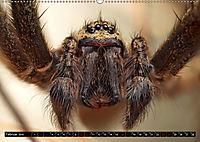 Faszination Makrofotografie: Spinnen (Wandkalender 2019 DIN A2 quer) - Produktdetailbild 2