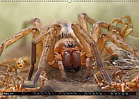 Faszination Makrofotografie: Spinnen (Wandkalender 2019 DIN A2 quer) - Produktdetailbild 3