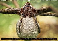 Faszination Makrofotografie: Spinnen (Wandkalender 2019 DIN A2 quer) - Produktdetailbild 6
