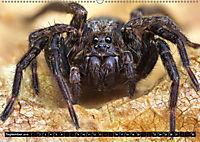 Faszination Makrofotografie: Spinnen (Wandkalender 2019 DIN A2 quer) - Produktdetailbild 9