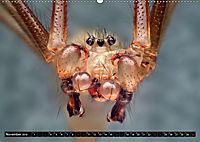 Faszination Makrofotografie: Spinnen (Wandkalender 2019 DIN A2 quer) - Produktdetailbild 11