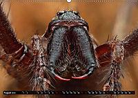 Faszination Makrofotografie: Spinnen (Wandkalender 2019 DIN A2 quer) - Produktdetailbild 8