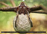 Faszination Makrofotografie: Spinnen (Wandkalender 2019 DIN A3 quer) - Produktdetailbild 6
