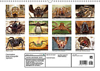 Faszination Makrofotografie: Spinnen (Wandkalender 2019 DIN A3 quer) - Produktdetailbild 13