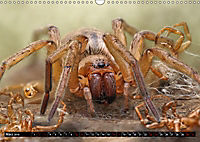 Faszination Makrofotografie: Spinnen (Wandkalender 2019 DIN A3 quer) - Produktdetailbild 3
