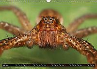 Faszination Makrofotografie: Spinnen (Wandkalender 2019 DIN A3 quer) - Produktdetailbild 7