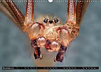 Faszination Makrofotografie: Spinnen (Wandkalender 2019 DIN A3 quer) - Produktdetailbild 11