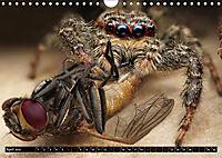 Faszination Makrofotografie: Spinnen (Wandkalender 2019 DIN A4 quer) - Produktdetailbild 4