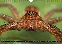 Faszination Makrofotografie: Spinnen (Wandkalender 2019 DIN A4 quer) - Produktdetailbild 7
