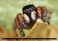 Faszination Makrofotografie: Springspinnen (Wandkalender 2019 DIN A3 quer) - Produktdetailbild 5