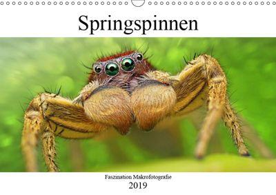 Faszination Makrofotografie: Springspinnen (Wandkalender 2019 DIN A3 quer), Alexander Mett
