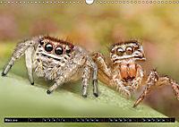 Faszination Makrofotografie: Springspinnen (Wandkalender 2019 DIN A3 quer) - Produktdetailbild 3
