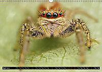 Faszination Makrofotografie: Springspinnen (Wandkalender 2019 DIN A3 quer) - Produktdetailbild 4