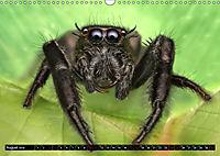 Faszination Makrofotografie: Springspinnen (Wandkalender 2019 DIN A3 quer) - Produktdetailbild 8
