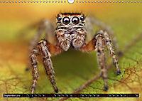 Faszination Makrofotografie: Springspinnen (Wandkalender 2019 DIN A3 quer) - Produktdetailbild 9