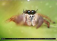 Faszination Makrofotografie: Springspinnen (Wandkalender 2019 DIN A3 quer) - Produktdetailbild 6