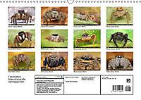 Faszination Makrofotografie: Springspinnen (Wandkalender 2019 DIN A3 quer) - Produktdetailbild 13