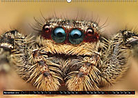 Faszination Makrofotografie: Springspinnen (Wandkalender 2019 DIN A2 quer) - Produktdetailbild 11