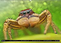 Faszination Makrofotografie: Springspinnen (Wandkalender 2019 DIN A2 quer) - Produktdetailbild 7
