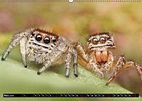 Faszination Makrofotografie: Springspinnen (Wandkalender 2019 DIN A2 quer) - Produktdetailbild 3