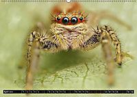 Faszination Makrofotografie: Springspinnen (Wandkalender 2019 DIN A2 quer) - Produktdetailbild 4