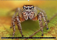 Faszination Makrofotografie: Springspinnen (Wandkalender 2019 DIN A2 quer) - Produktdetailbild 9